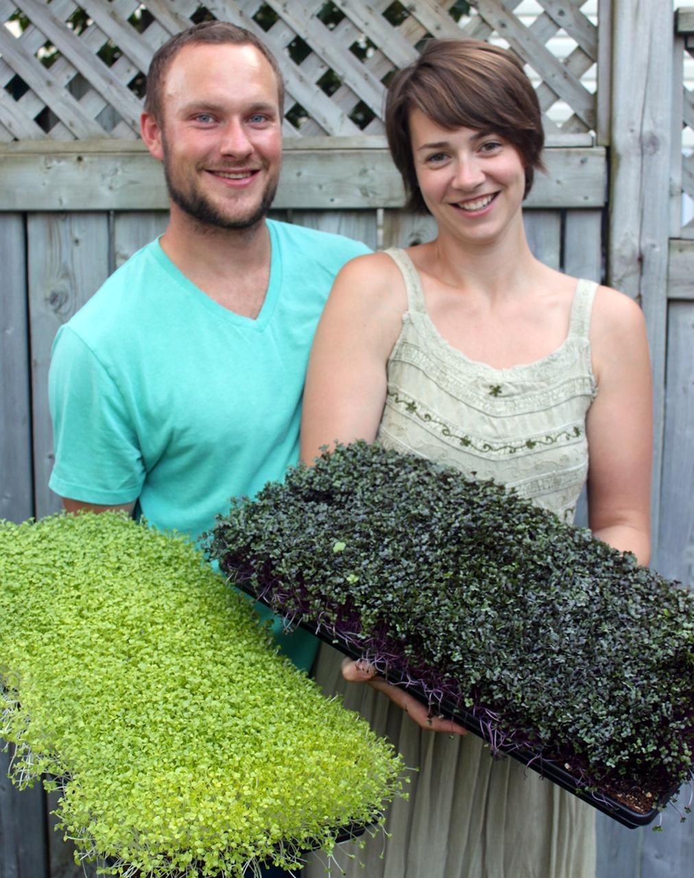 Seedling Microgreens